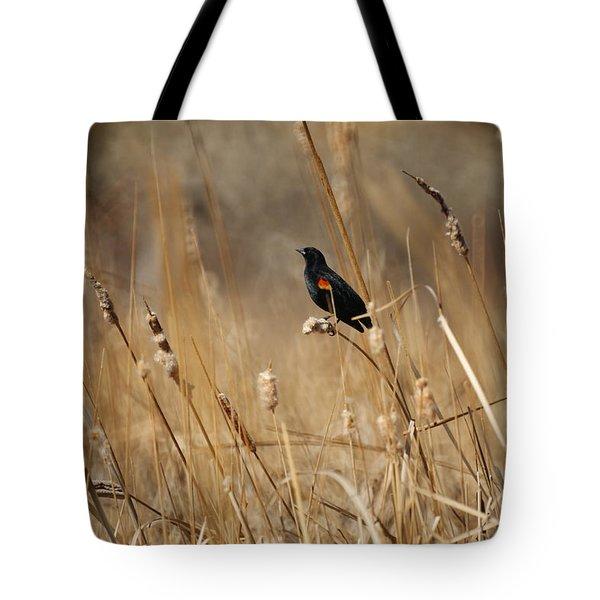 Red Winged Blackbird Tote Bag by Ernie Echols