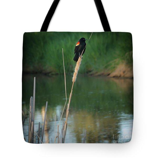 Red Winged Blackbird  Tote Bag by Robert Bales