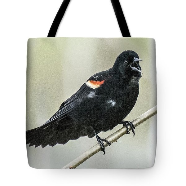 Red-winged Blackbird Singing Tote Bag