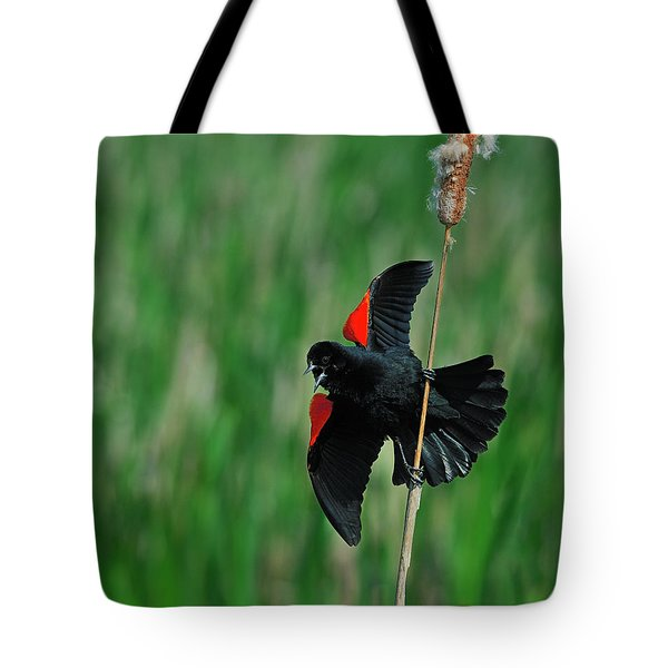 Red-winged Blackbird Tote Bag by Tony Beck