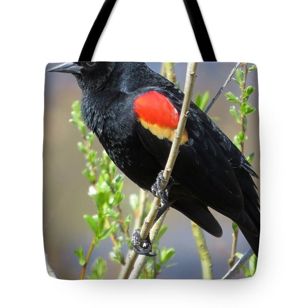 Red-winged Perch Tote Bag