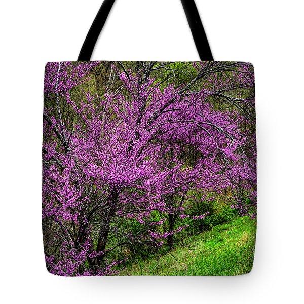 Redbud And Path Tote Bag