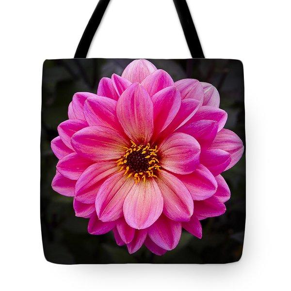 Reddish Dahlia Tote Bag