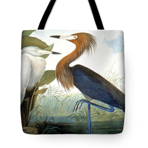 Reddish Egret, Tote Bag by Granger