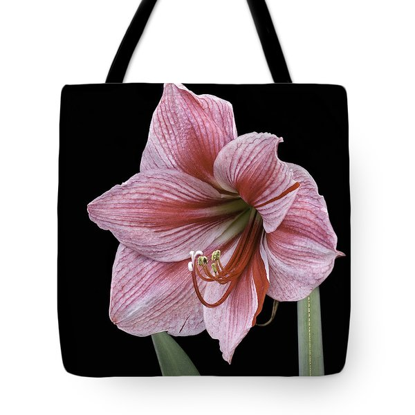 Tote Bag featuring the photograph Reddish Pink Lily by Ken Barrett