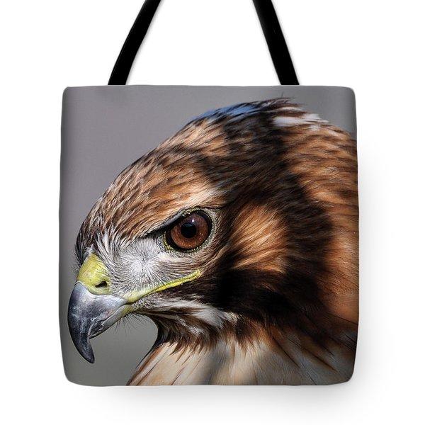 Redtail Hawk Tote Bag