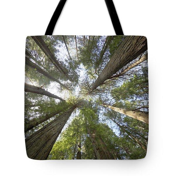 Redwood Towering Giants Tote Bag