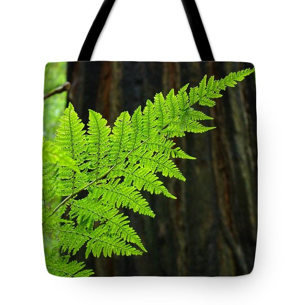 Redwood Tree Forest Ferns Art Prints Giclee Baslee Troutman Tote Bag by Baslee Troutman