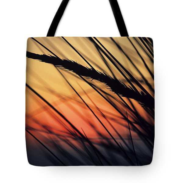 Reeds And Sunset Tote Bag by Brent Black - Printscapes