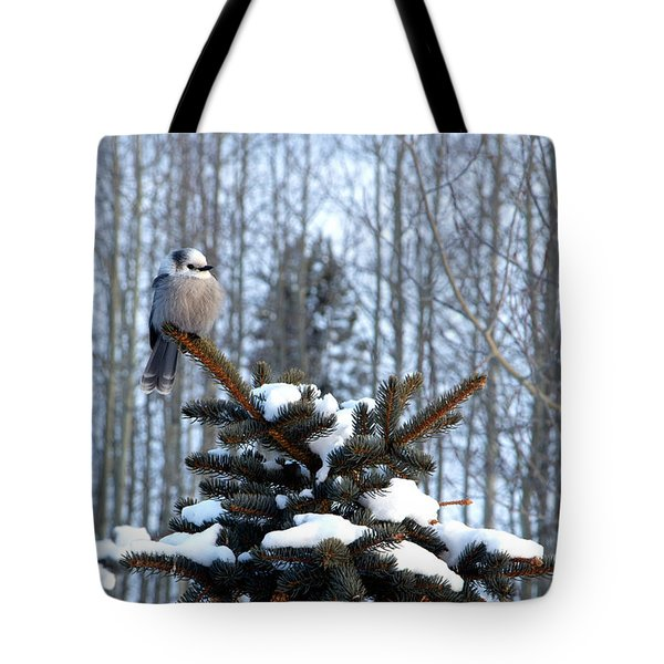 Refined Little Gray Jay In Colorado Tote Bag