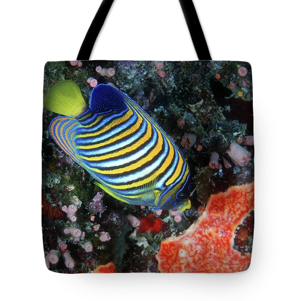 Regal Angelfish, Great Barrier Reef Tote Bag