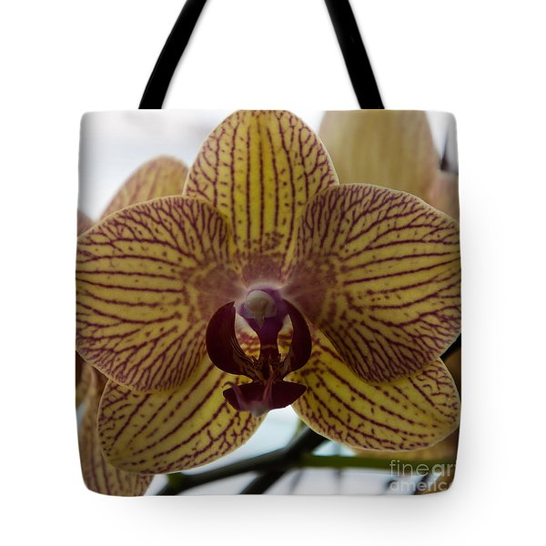 Tote Bag featuring the photograph Regal Orchid Bloom by Kirt Tisdale