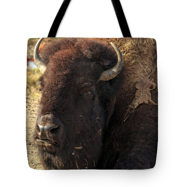 Resting Buffalo Tote Bag