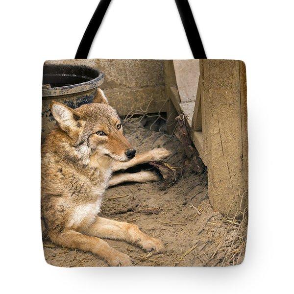 Resting Coyote Tote Bag