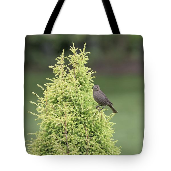 Tote Bag featuring the photograph Resting In The Trees by Kim Hojnacki