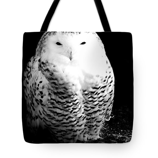 Resting Snowy Owl Tote Bag by Darcy Michaelchuk