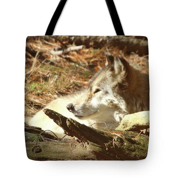 Resting Wolf Tote Bag by Karol Livote
