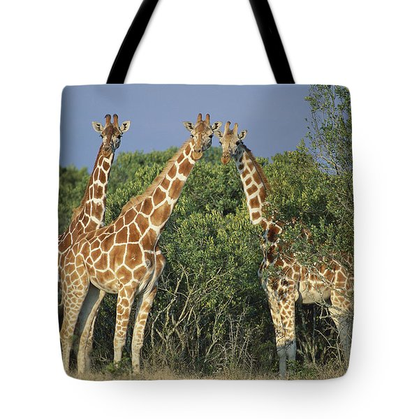 Reticulated Giraffe Trio Tote Bag