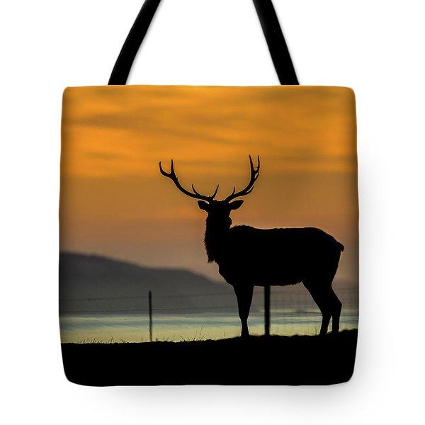 Reyes Morning  Tote Bag