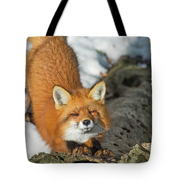 Tote Bag featuring the photograph Reynard The Fox by Nina Stavlund
