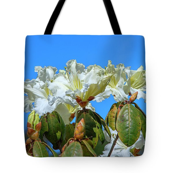 Rhododendron Ciliicalyx Dthn0213 Tote Bag
