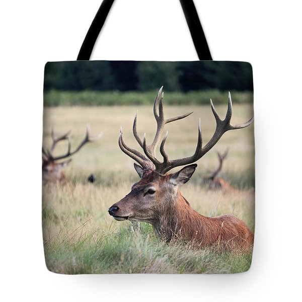 Richmond Park Stags Tote Bag