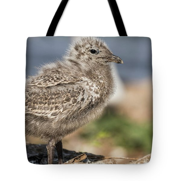 Tote Bag featuring the photograph Ring-billed Gull Chick 2016-1 by Thomas Young
