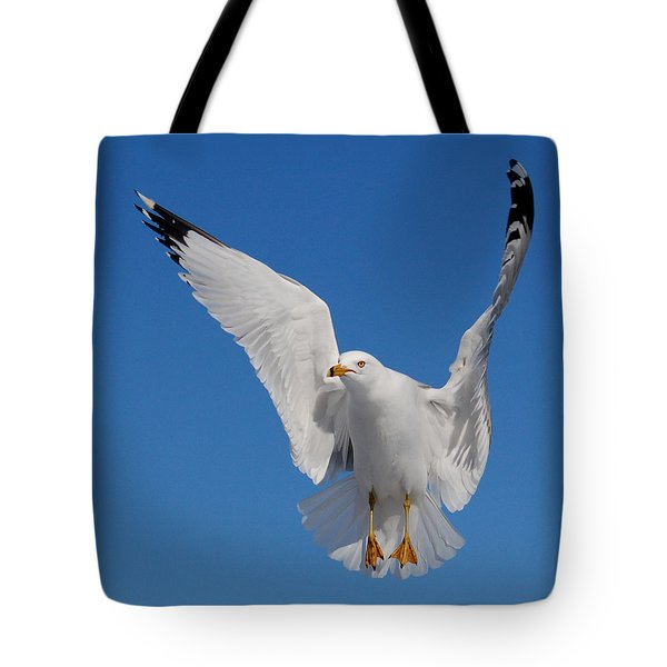 Ring Billed Gull In Flight Tote Bag by Mircea Costina Photography