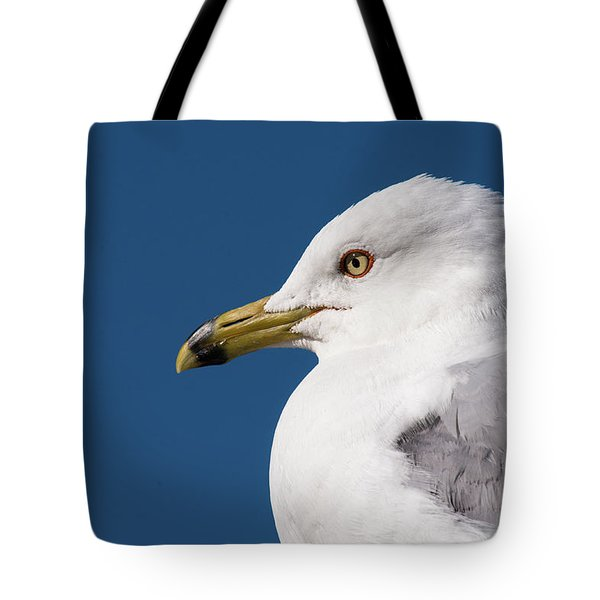 Ring-billed Gull Portrait Tote Bag