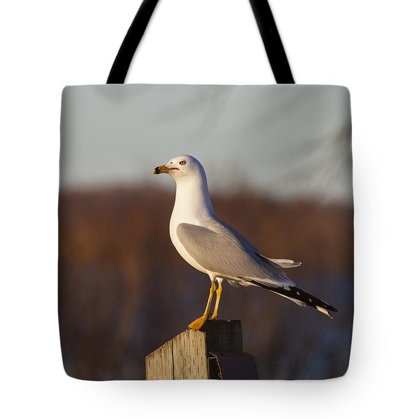 Ring Billed Gull Tote Bag