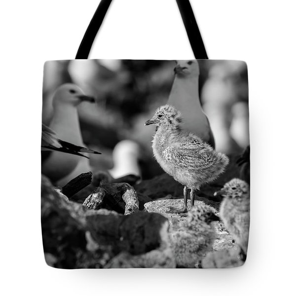 Tote Bag featuring the photograph Ring-billed Gulls 2016-1 by Thomas Young