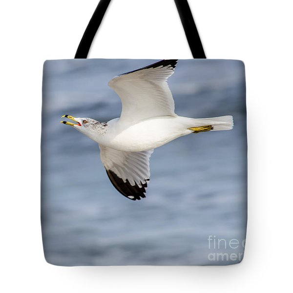 Ring-billed Seagull Looking For Attention Tote Bag by Debra Martz