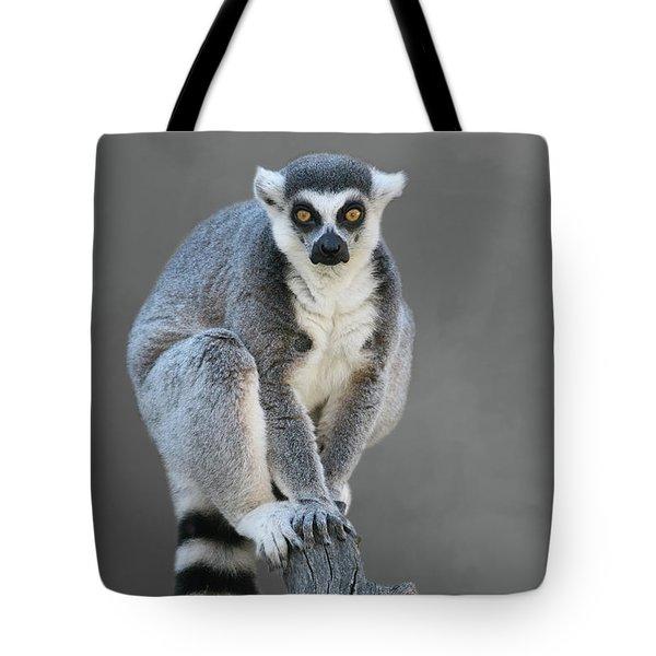 Ring-tailed Lemur #6 V2 Tote Bag