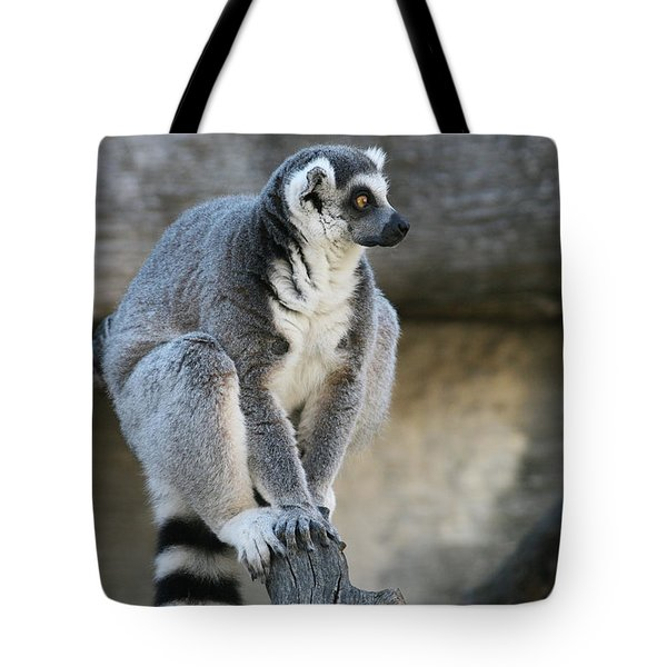 Ring-tailed Lemur #7 Tote Bag