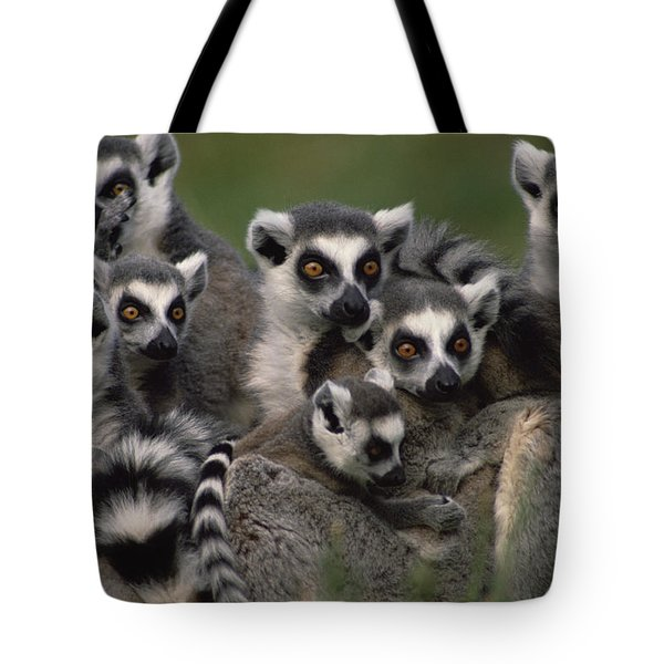 Tote Bag featuring the photograph Ring-tailed Lemur Lemur Catta Group by Gerry Ellis