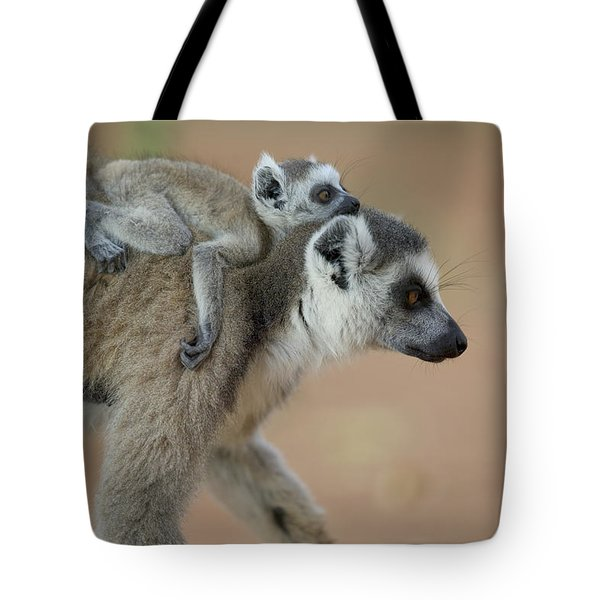 Ring-tailed Lemur Mom And Baby Tote Bag by Cyril Ruoso