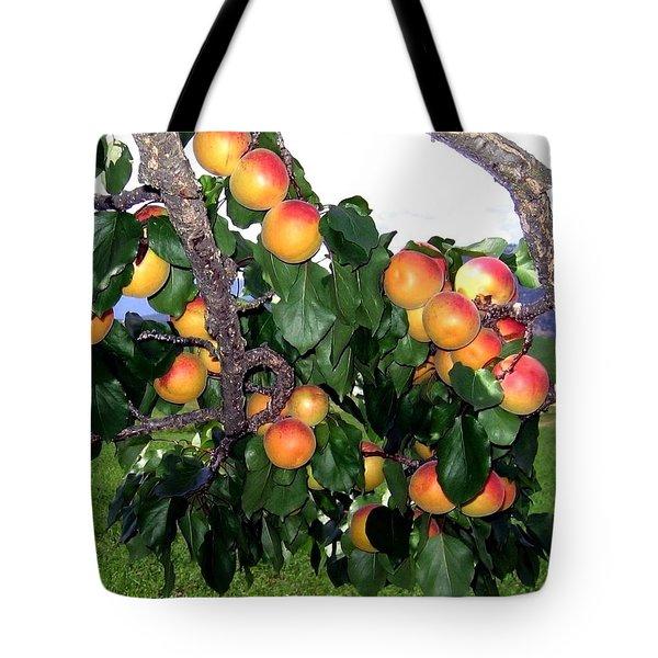 Ripe Apricots Tote Bag by Will Borden