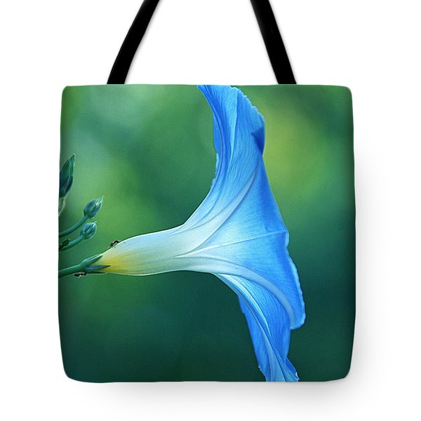 Tote Bag featuring the photograph Rise And Shine by Byron Varvarigos