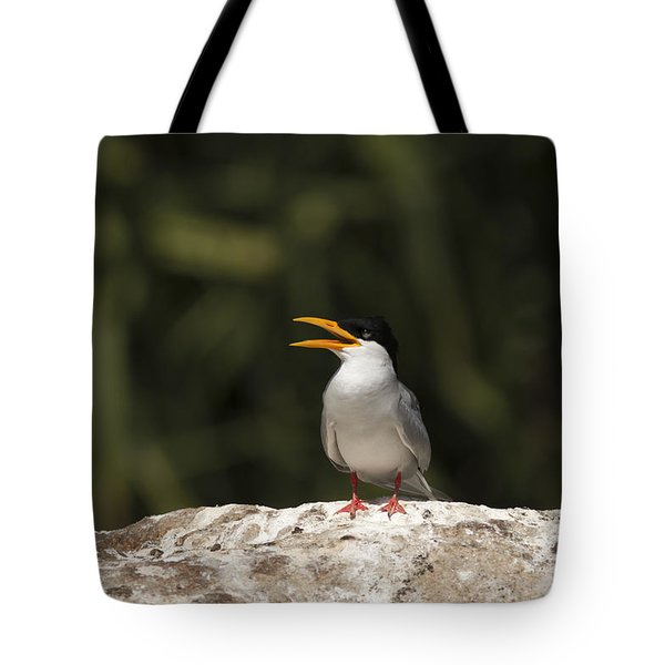 River Tern Tote Bag