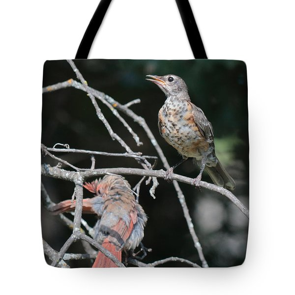 Robin And Cardinal 2664 Tote Bag