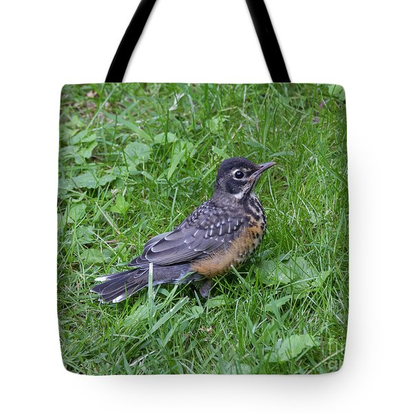 Tote Bag featuring the photograph Robin Fledgling by Chris Scroggins