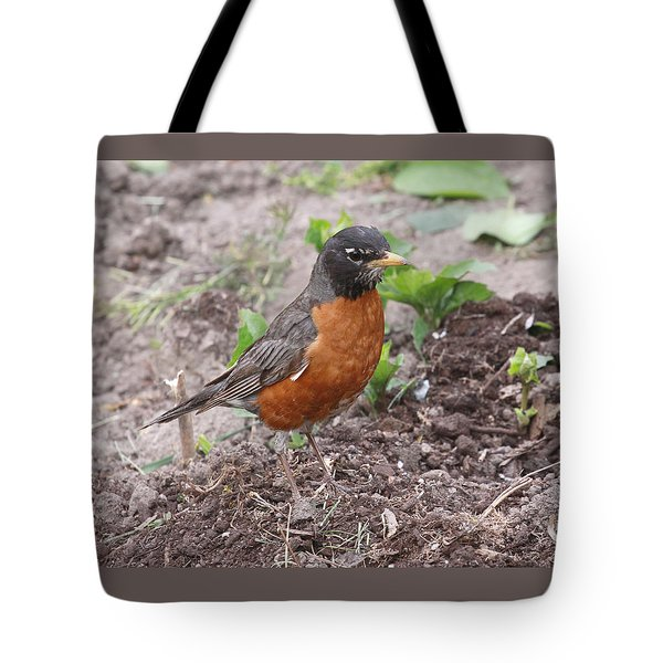 Robin Hunting Tote Bag