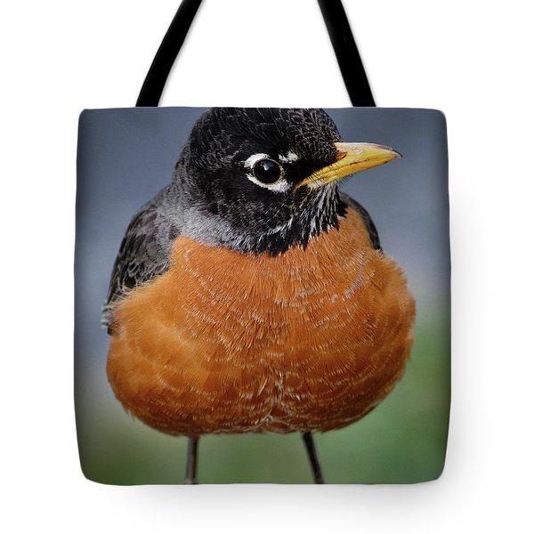 Robin II Tote Bag by Douglas Stucky