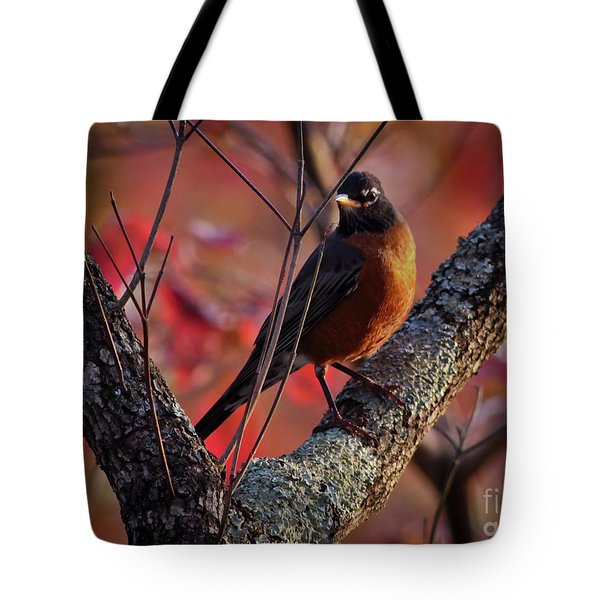 Tote Bag featuring the photograph Robin In The Dogwood by Douglas Stucky