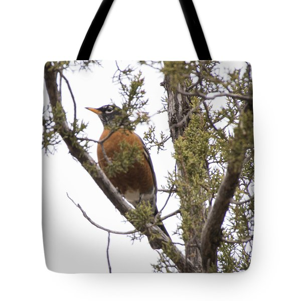 Robin On The Lookout Tote Bag