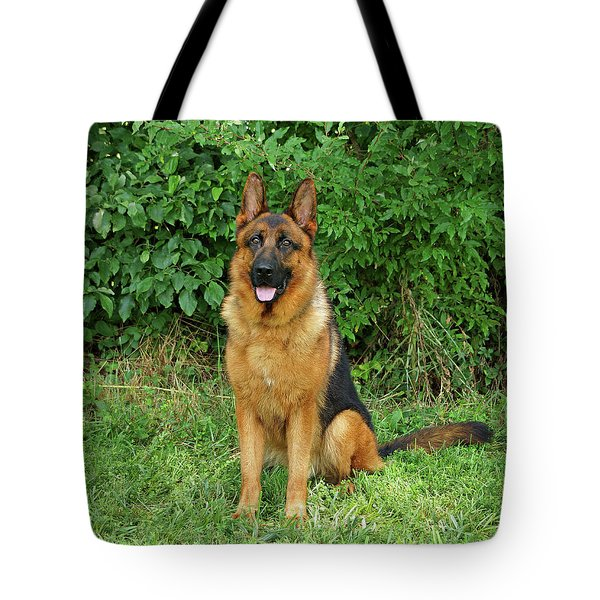 Tote Bag featuring the photograph Rocco Sitting by Sandy Keeton