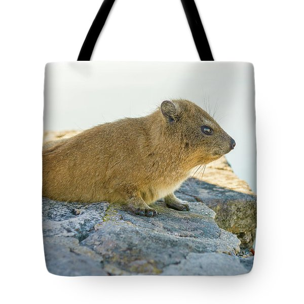 Rock Hyrax On Table Mountain Cape Town South Africa Tote Bag