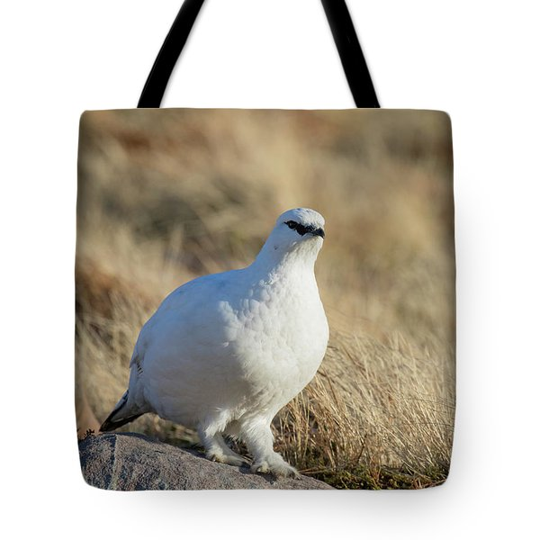 Tote Bag featuring the photograph Rock Ptarmigan by Karen Van Der Zijden