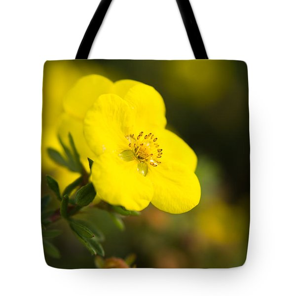 Tote Bag featuring the photograph Rock Rose by Erin Kohlenberg