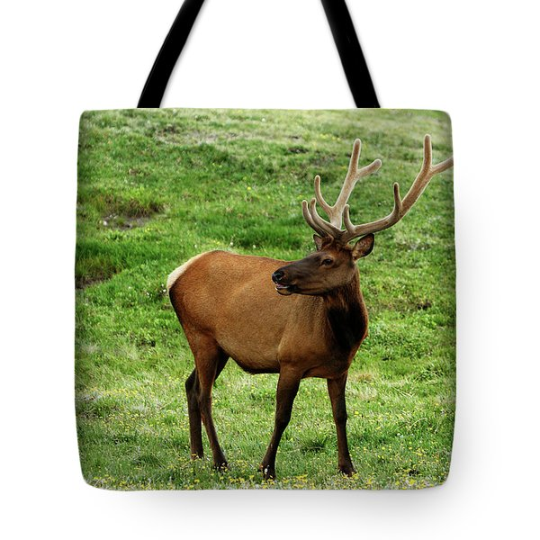 Tote Bag featuring the photograph Rocky Mountain Elk 3 by Marie Leslie